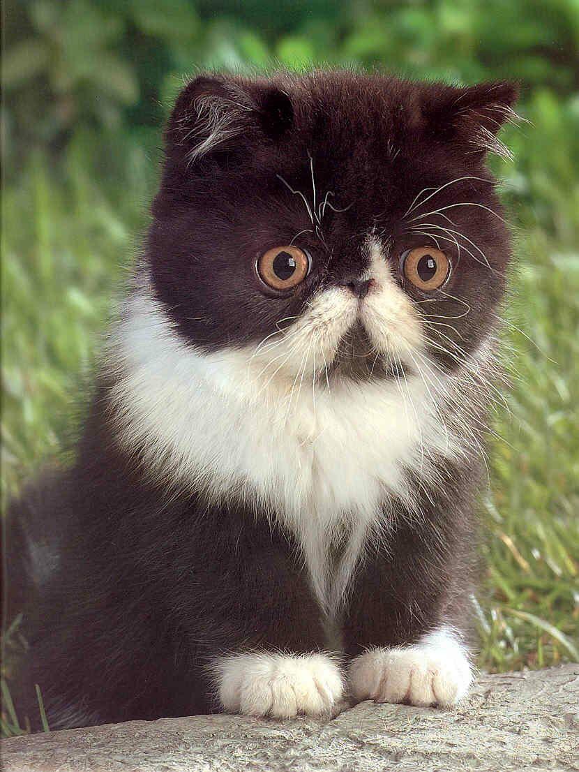 Kitty World: Kitten Pictures Cute