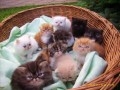 Go to my kittens Picture