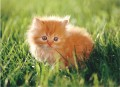 Go to Kitten in the grass Picture